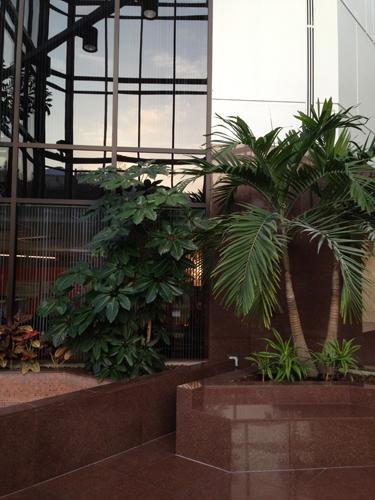 interior plant landscape
